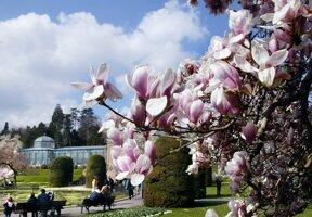 Maurischer Garten Magnolie