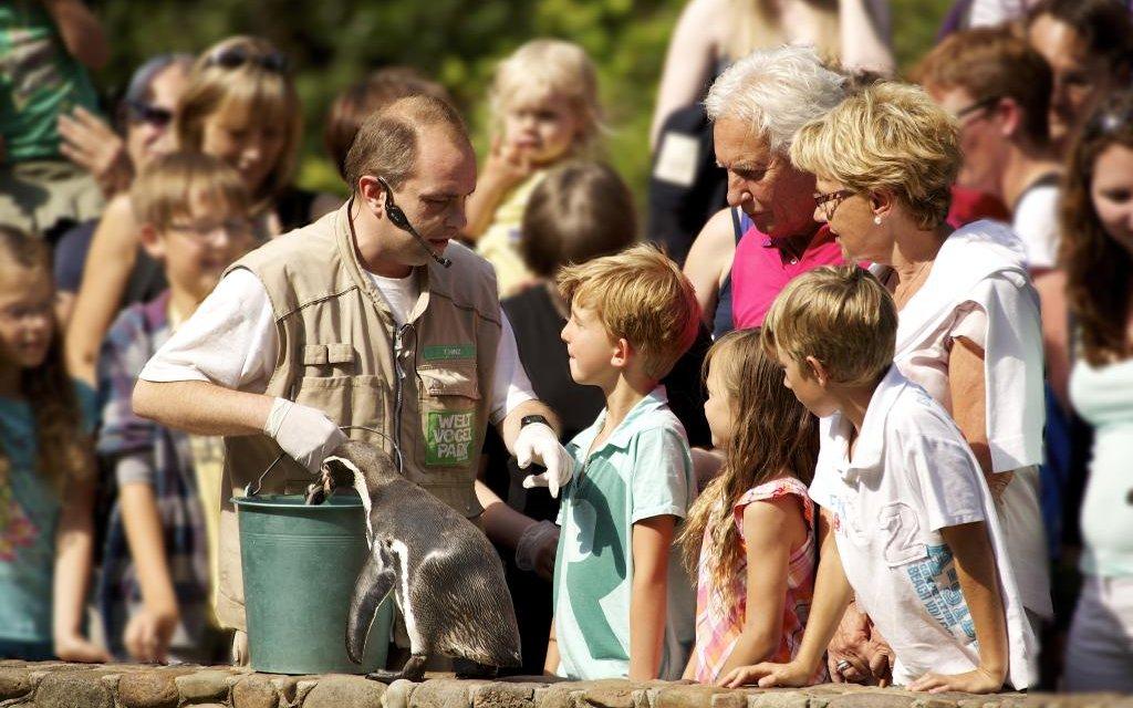Pinguinfütterung im Weltvogelpark Walsrode