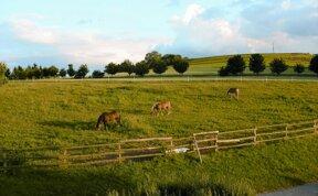 Pferdekoppel hoteleigen