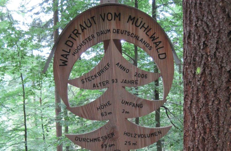 Namensschild Baum Waldtraut Freiburg