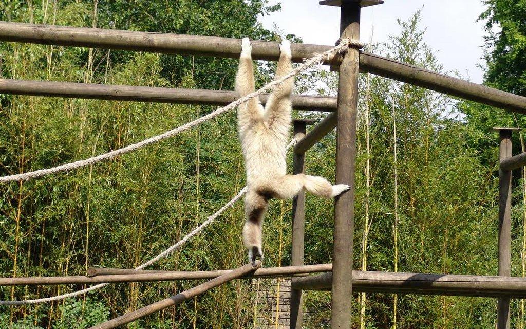 Affe im Tier- und Freizeitpark Thüle