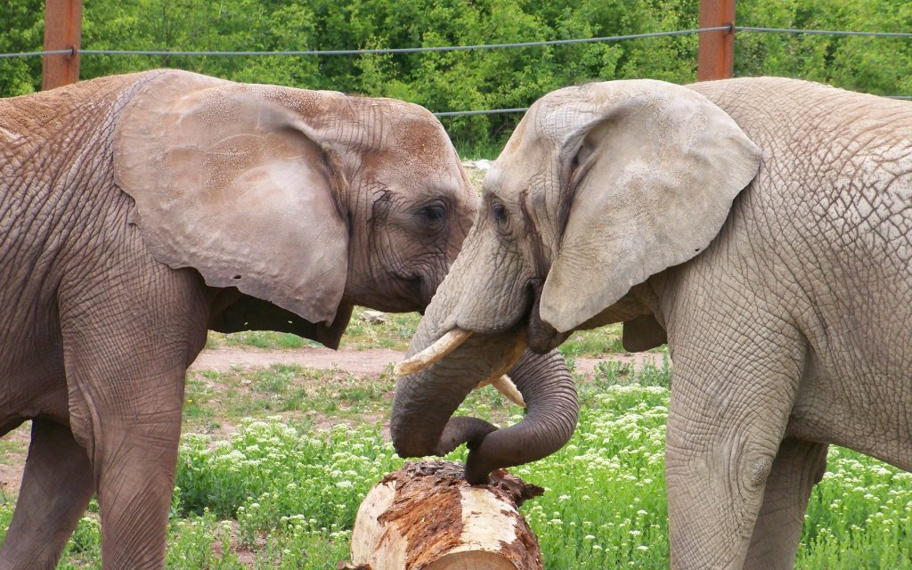 Elefanten im Thüringer Zoopark Erfurt