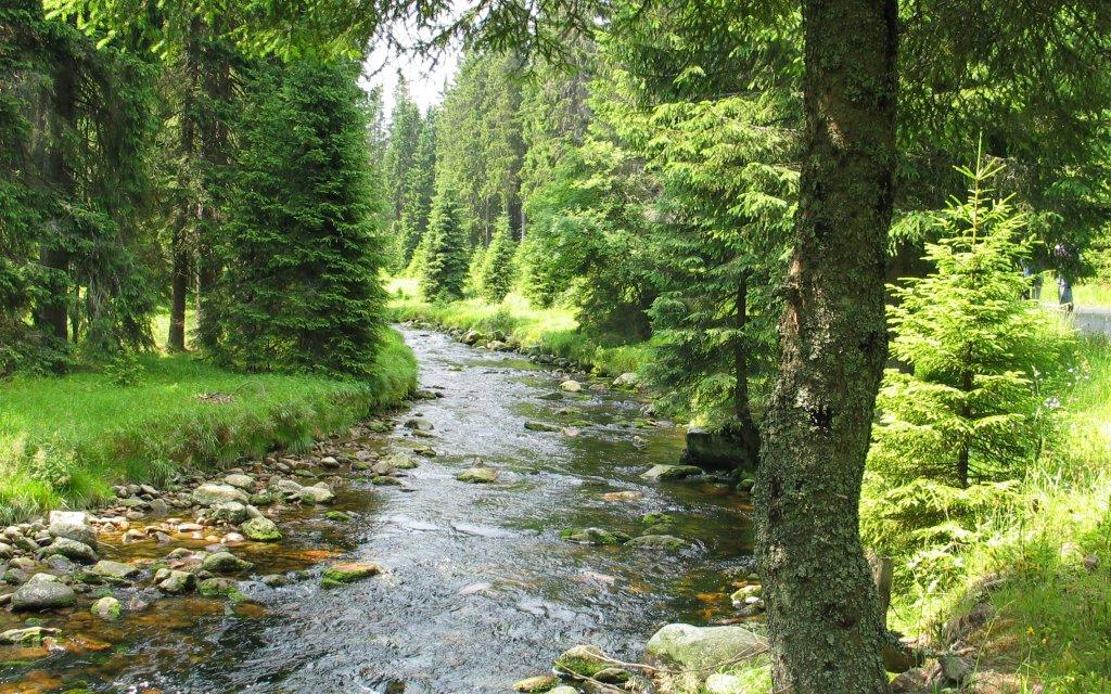 Fluss im Böhmerwald