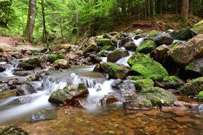 Wiesensteig Ufer der Wilden Rench C Kur- und Tourismus GmbH Bad Peterstal-Griesbach