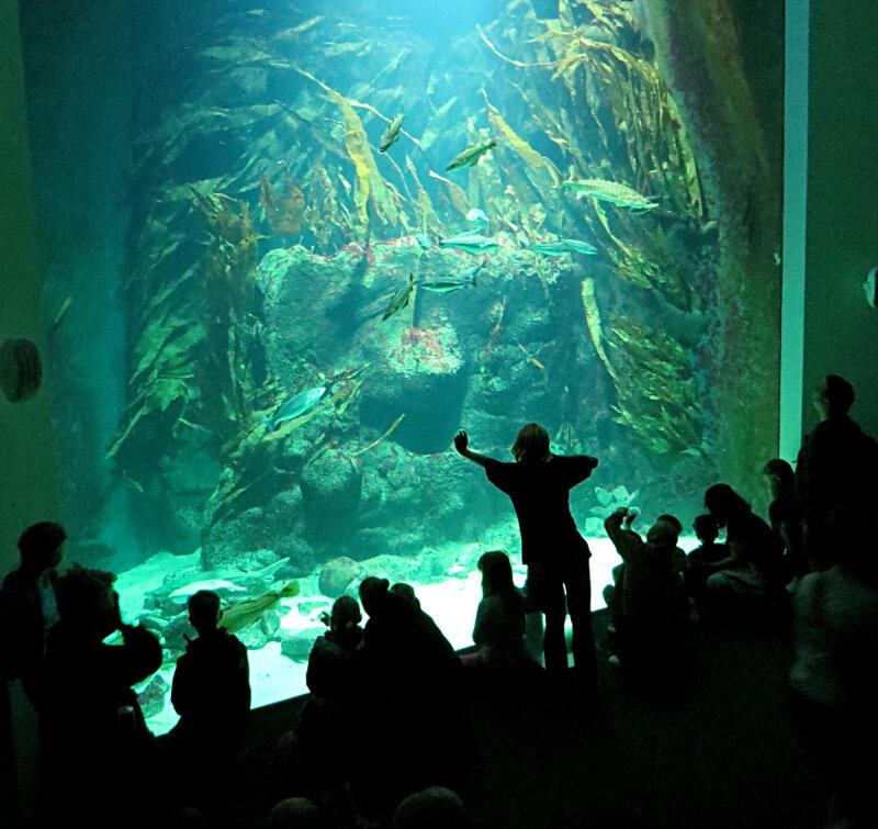 Großaquarium im Multimar Wattforum