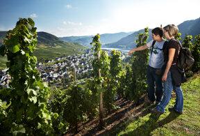 Wandern im Weinberg © Tourist-Information Ferienland Cochem