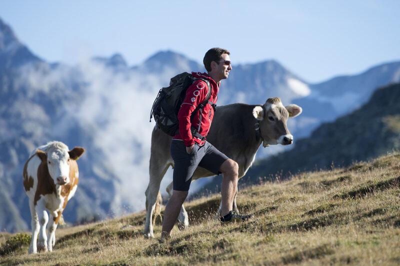 Kühe im Sankt Johann im Ahrntal
