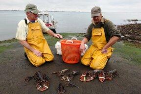 Krebsfischer c www.laatzeelandzien.nl Ben Biondina