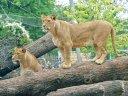Familienurlaub mit Zoo und Spaghetti satt