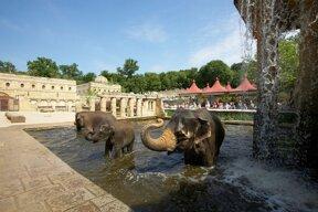 Dschungelpalast Elefantenbad©Erlebnis-Zoo Hannover