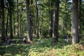 Fontainebleau Wald, Fahrrad Familie c CRT Paris Ile-de-France, Amelie-Laurin (2)
