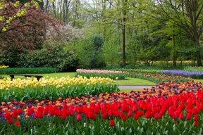 Blumenbeet mit Weg ohne C pixabay