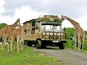 Auf tierischer Safari im Serengeti-Park