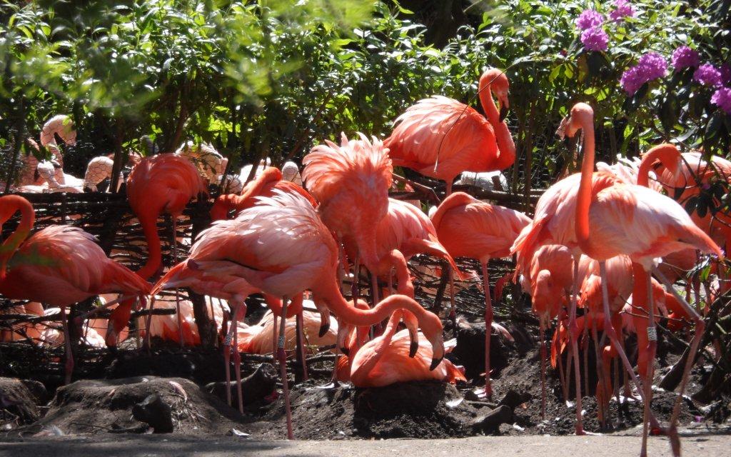 Flamingos im Vogelparks Walsrode