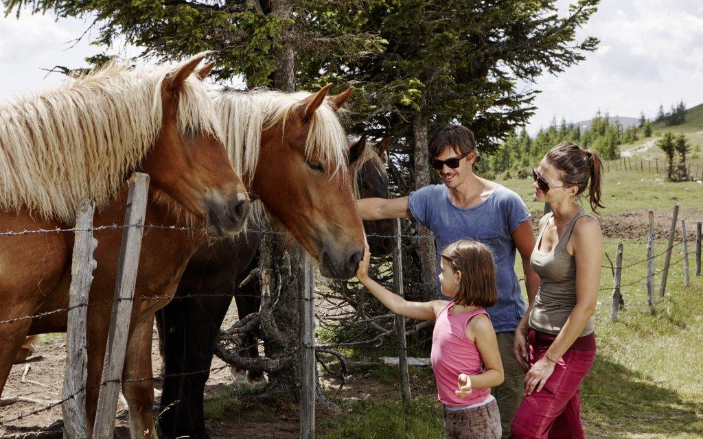 Familie mit Kindern füttert Pferde