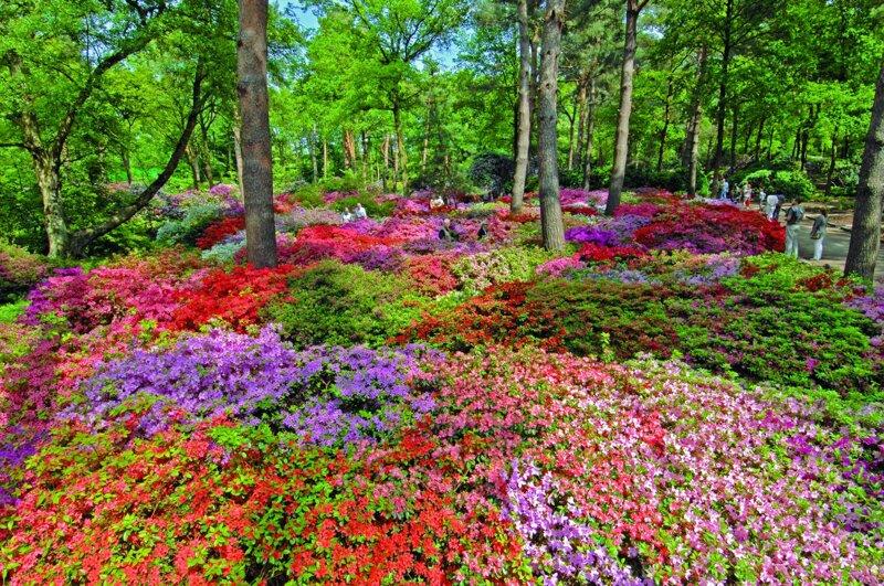 Rhododendron-Park botanika Bremen