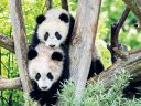 Wildes Wien - Auf zum ältesten Zoo der Welt