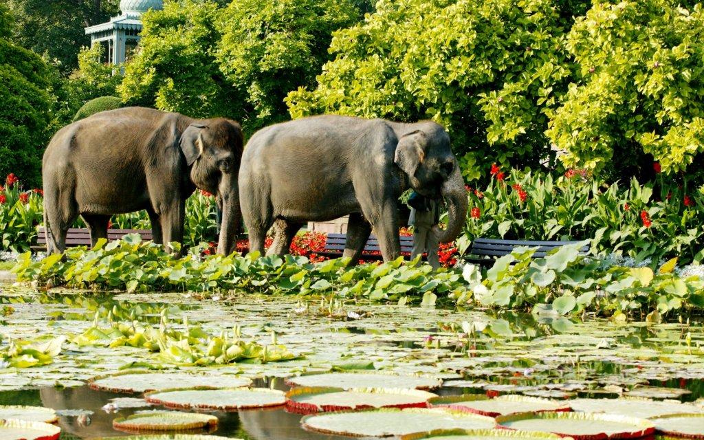 Elefanten Spaziergang in der Wilhelma Stuttgart