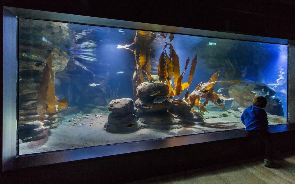 Aquarium im Zoo am Meer Bremerhaven