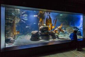 Aquarium (c) Zoo am Meer