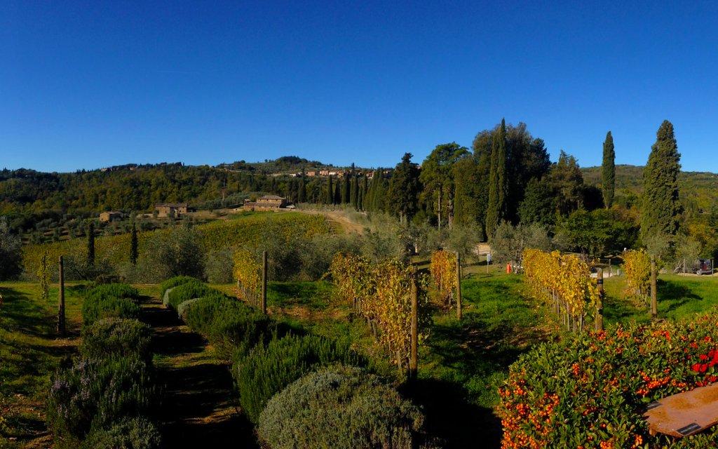 Blick auf Hügel mit Pinienbäumen in der Toskana