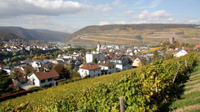 Bingen umgeben von Weinbergen - Bingen surrounded by vineyards