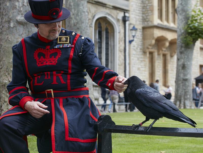 Tower-Rabe und ein Yeoman Warder