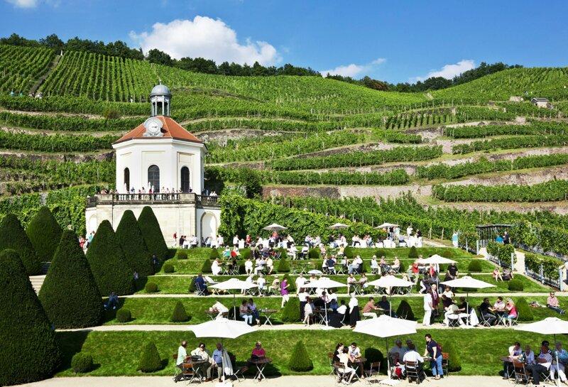 Weinhänge um Schloss Wackerbarth