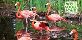 vogelpark-exklusiv-jubilaeumssaison