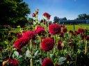 171 Tage Blütenfest - die BUGA in Erfurt