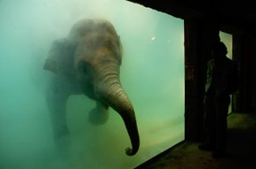 Elefant badend Zoo Leipzig