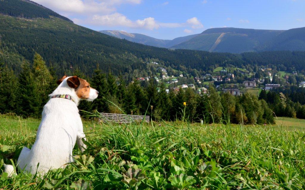 Hund blickt auf Spindlermuehle in Tschechien