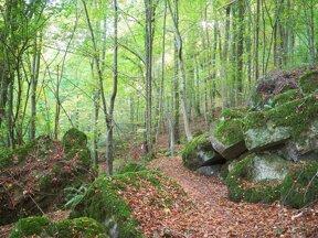 Bäume und Felsen im Müllerthal