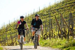 Radfahrer vor Weinbergen