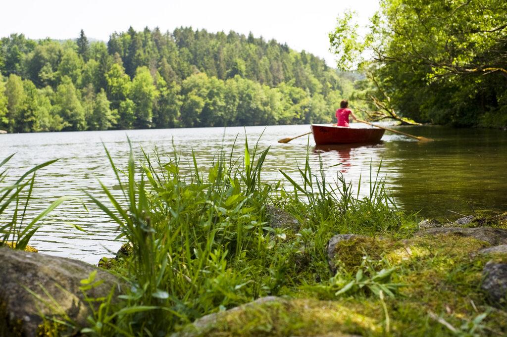 Fluss im Bayerischen Wald