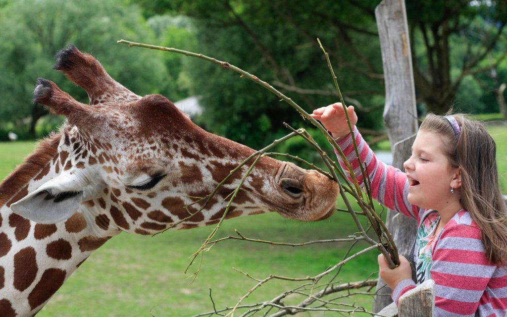 junges Mädchen füttert eine Giraffe im Zoo Bad Belohrad