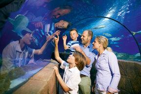 Familie c Sea Life Deutschland GmbH