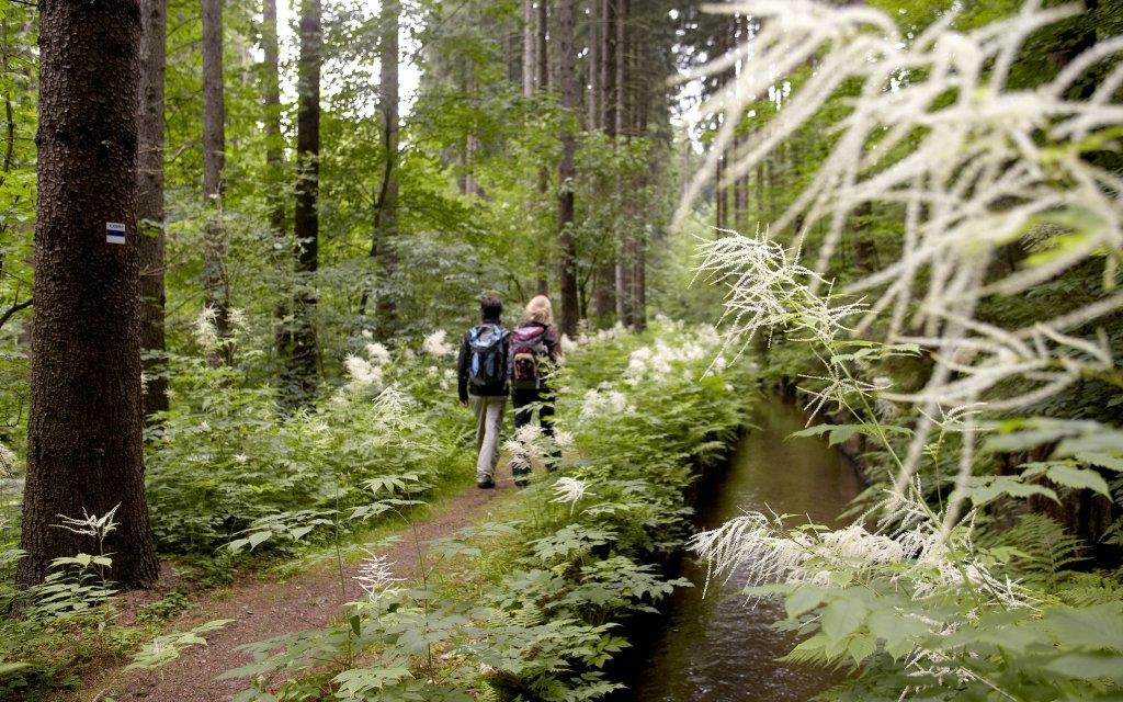 Wanderer im Wald im Erzgebirge