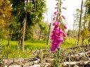 Zwischen Blüten und Bergen: BUGA Erfurt 2021