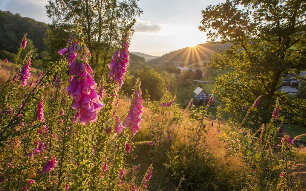 Natur im Schmallenberger Sauerland