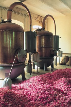 Grasse, Museum Fragonard Destillierapparate und Blüten c OT Grasse