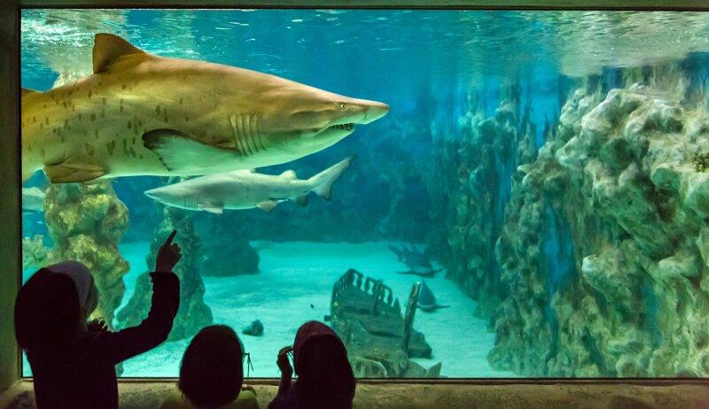 Haifischbecken im Meeresaquarium Zella Mehlis
