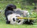 Zoobesuch bei Meng Meng und Jiao Qing