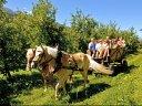 Griasti Südtirol, das Apfelparadies der Alpen