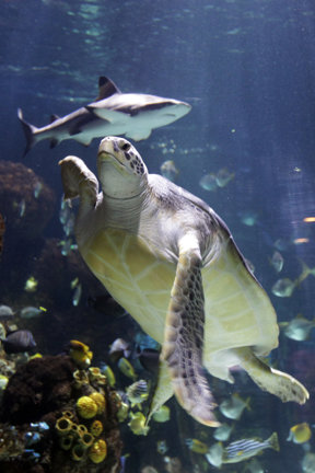 Schildkröte Hochformat