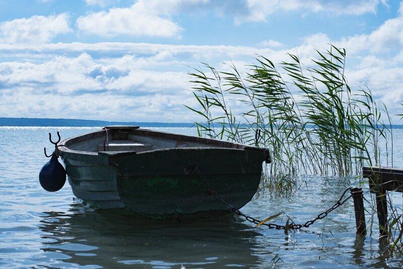 Boot und Uferschilf