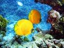 Familienausflug in die bunte Welt von Nemo