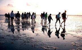 Wattenmeer mit Wandergruppe