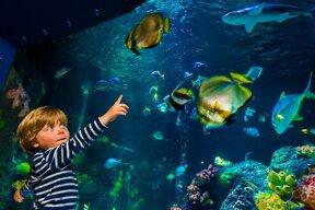 SEA LIFE Ozeanbecken