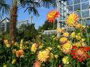 1000 Palmen und die größte Blüte der Welt